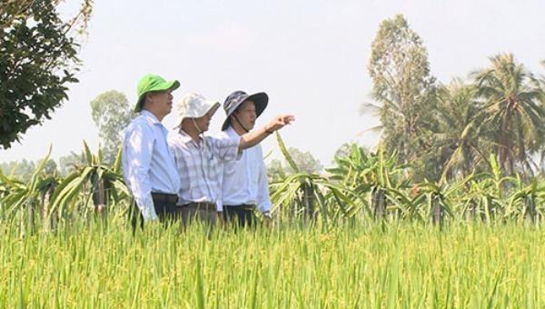 Tiền Giang: Tính toán nâng cao năng lực cạnh tranh của ngành nông nghiệp trong điều kiện biến đổi khí hậu