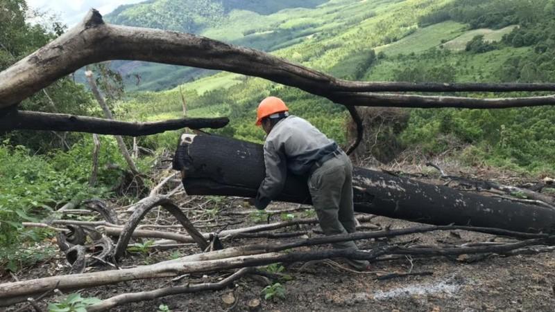 Vụ phá rừng tại tiểu khu 235 ở Bình Định: UBND tỉnh chưa đồng ý với báo cáo của Sở NN&PTNT