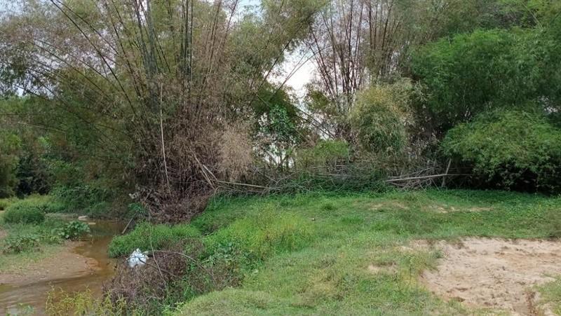 Ông Dương trồng nhiều lùm tre lớn để bảo vệ keo trên đất bãi bồi giữa sông An Tượng.