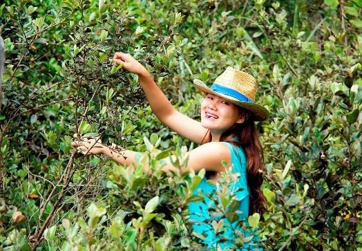 Công dân gửi email đề xuất, Đà Nẵng triển khai con đường hoa sim