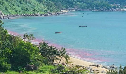 Vệt nước màu đỏ được người dân chụp tại Đà Nẵng thực chất là ấu trùng ruốc