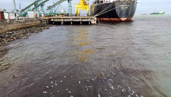 Vị trí nước thải đen xả ra từ cảng Hào Hưng