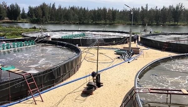 Tuyên truyền an toàn điện tại khuôn viên 1 hộ dân tại huyện Bình Sơn