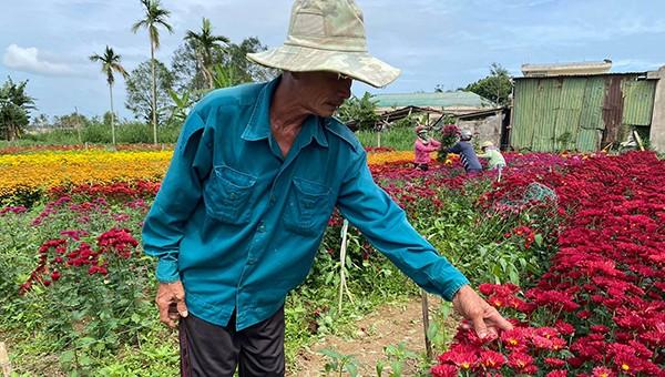 Liên tục xảy ra các vụ phá hoại vườn hoa bán Tết ở Quảng Ngãi