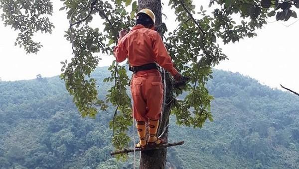 Công nhân Đội Quản lý đường dây cắt tỉa cây vướng hành lang tuyến.