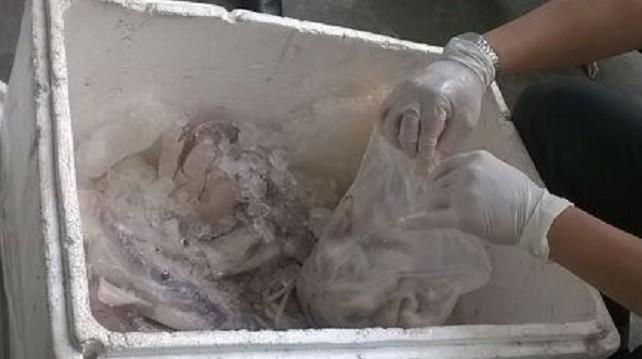 Mực ống ướp hóa chất lạ bị thu giữ
