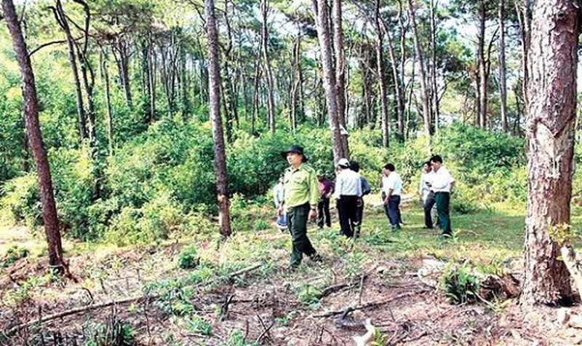 Đẩy nhanh tiến độ trồng rừng ven biển