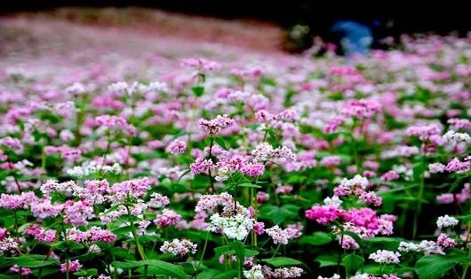 Kỳ diệu loài hoa nở trên đá