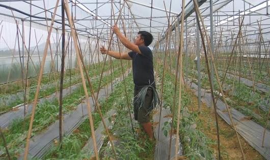 Những thanh niên trồng rau sạch trên vùng đất khó