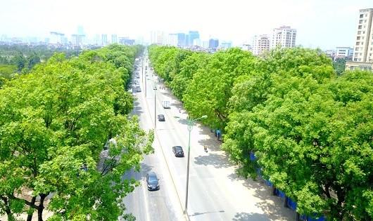 Mở rộng đường và nỗi tiếc nuối cây xanh