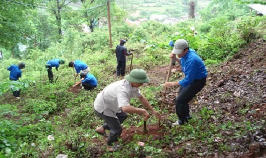 Giảm vi phạm về bảo vệ và phát triển rừng