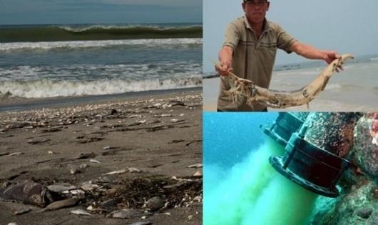 Formosa Hà Tĩnh là thủ phạm gây ra vụ cá chết hàng loạt tại các tỉnh miền Trung