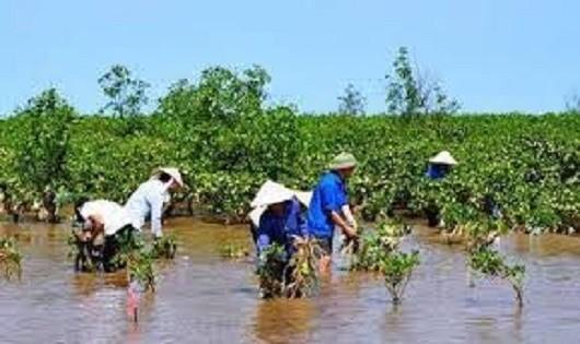 Thêm gần 30 triệu USD  để Việt Nam chống biến đổi khí hậu