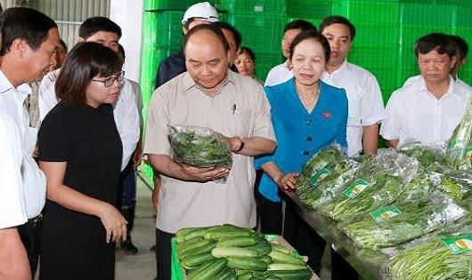 Thủ tướng Chính phủ Nguyễn Xuân Phúc thăm Dự án phát triển nông nghiệp ứng dụng công nghệ cao Vineco tại huyện Vĩnh Bảo, Hải Phòng.