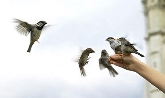Bầy chim sẻ trên ban công