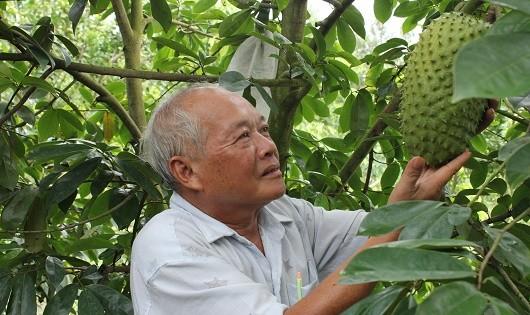 """Người nông dân phấn khởi chăm sóc nâng niu những trái mãng cầu đã giúp họ """"đổi đời"""""""
