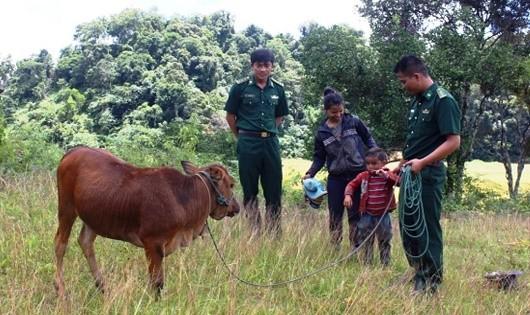 Thượng úy Hồ Hữu Ngạn và Thượng úy Xiêng Nghĩa Tình thăm và kiểm tra việc chăm sóc bò của gia đình A Xiển.