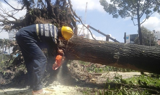 """TPHCM sắp di dời, đốn hạ 123 cây xanh để phục vụ dự án mở rộng 2 tuyến đường """"giải cứu"""" kẹt xe quanh sân bay Tân Sơn Nhất (Ảnh VNN)"""