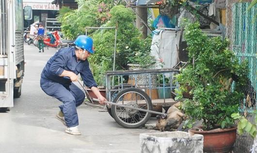 Xử phạt không đeo rõ mõm cho chó: Những phản hồi không… vô lý!