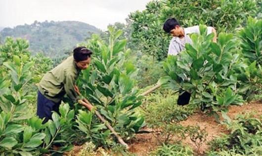 Chăm sóc, bảo vệ và phát triển rừng để giảm thiểu tác hại của thiên tai.