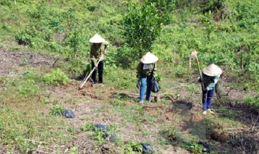 Cộng đồng dân cư đã quản lý, bảo vệ có hiệu quả trên 1,12 triệu ha rừng. Ảnh minh họa.
