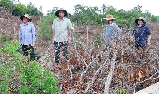 Cơ quan chức năng kiểm tra thực địa vụ phá rừng ở huyện Đồng Xuân.