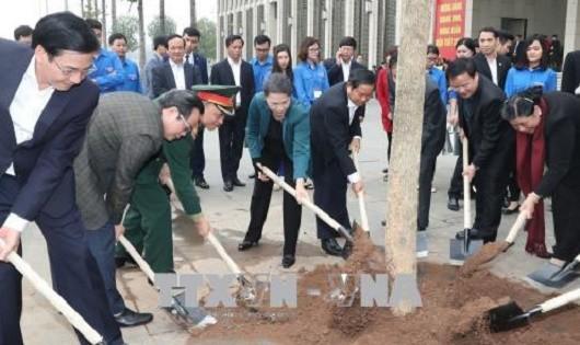 40 cây hoa ban Điện Biên  được trồng phía trước Lăng Bác