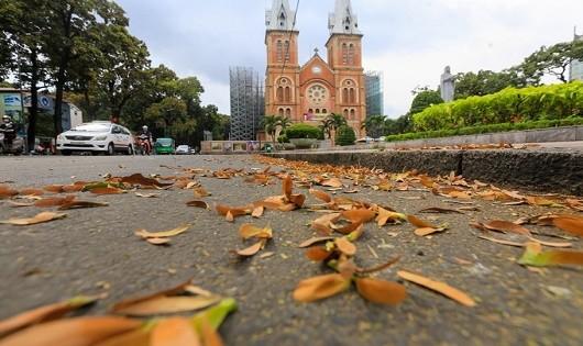 Sống chậm giữa mùa mưa… sao Sài Gòn