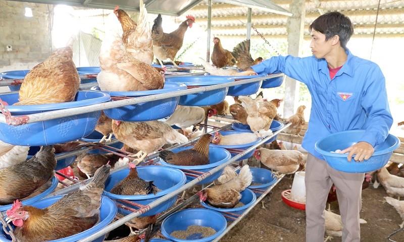Đảng viên Lương Văn Vương (thôn Mai Cần, xã Thanh Nguyên, huyện Thanh Liêm, Hà Nam) vay vốn NHCSXH đầu tư cải tạo ao nuôi cá, chuồng trại nuôi gà...