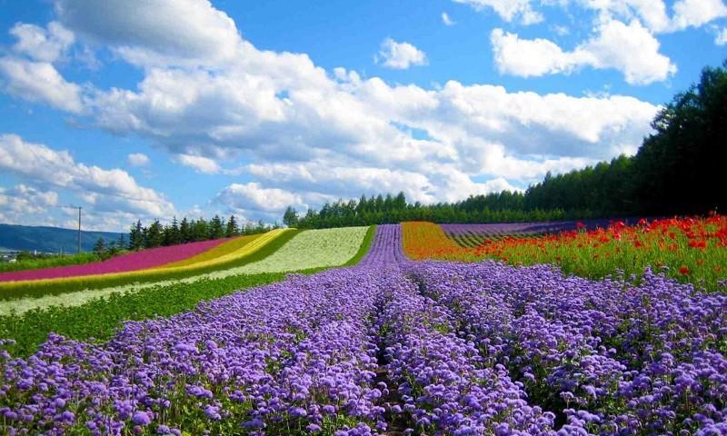 Đẹp ngẩn ngơ những làng hoa Đà Lạt