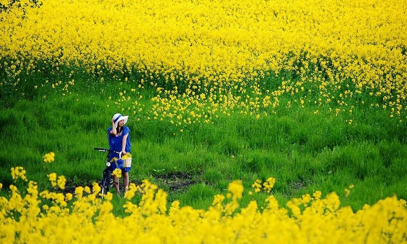[Truyện ngắn] Ngang qua mùa xuân