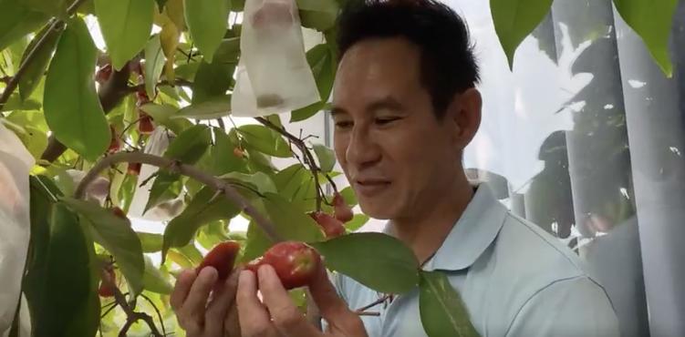 Lý Hải - Minh Hà vào vườn hái trái cây. (Ảnh: Chụp màn hình)