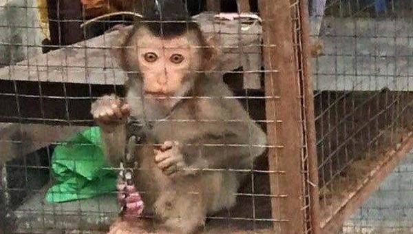 Hà Nội, TP.HCM tỷ lệ xử lý thành công vụ việc liên quan đến động vật hoang dã còn thấp