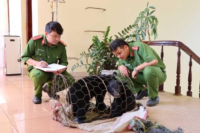 Kịp thời cứu hai cá thể gấu bị buôn bán trái phép