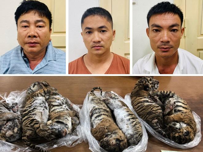 TAND Hà Nội tuyên phạt Nguyễn Hữu Huệ (6 năm tù) Phạm Văn Vui (5 năm tù) và Hồ Anh Tú (5 năm tù) cho hành vi vận chuyển buôn bán trái phép 7 cá thể hổ con