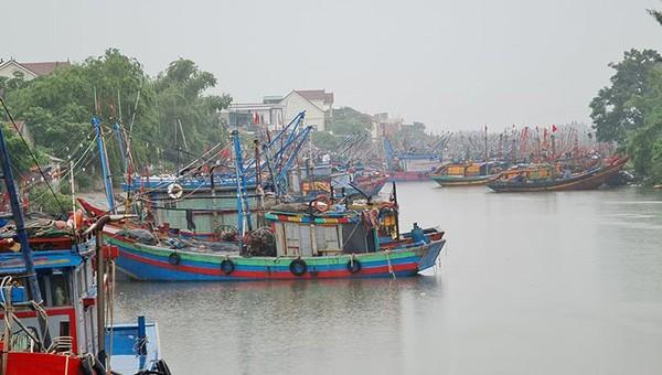 Các tàu thuyền vào nơi trú bão