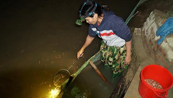 Chong đèn săn con chui lên từ bùn đất, 'vớt' hàng triệu đồng mỗi đêm