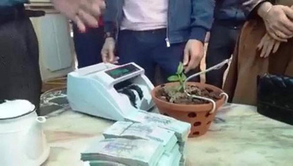 Cây lan cao 7cm được giao dịch với giá hơn 1,6 tỷ đồng