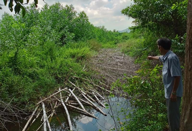 Bình Định: Trưởng xóm chiếm bãi bồi trồng keo, gây ngập úng đất canh tác của người dân