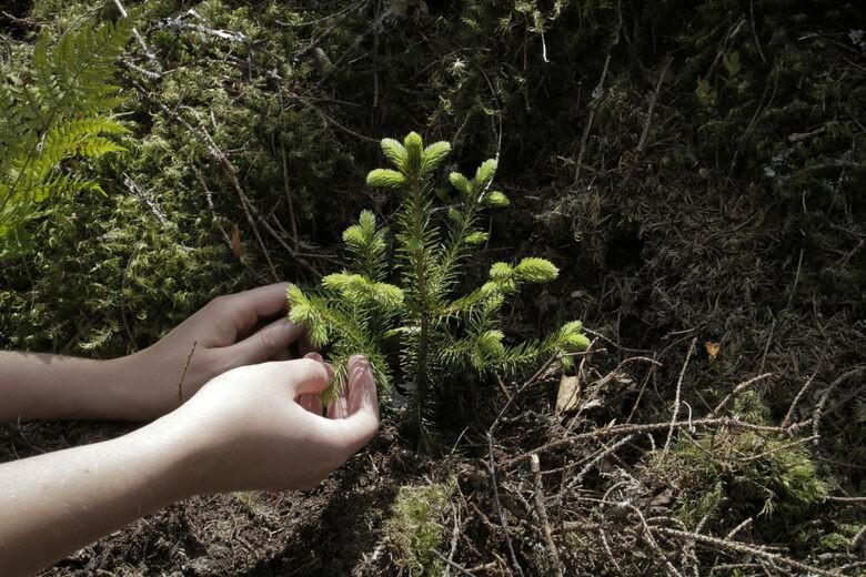Na Uy khơi dậy sức mạnh cộng đồng để trồng rừng