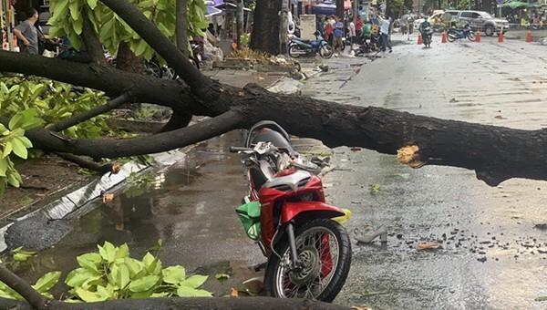 Cây xanh liên tục gây nạn trong mưa, TP HCM chỉ thị khẩn