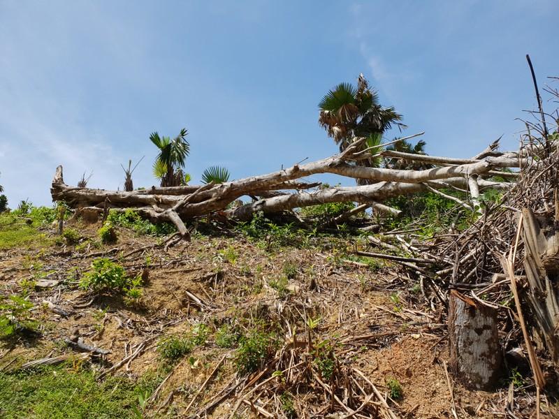 Nghệ An: Nạn phá rừng ở huyện Quỳ Châu đến mức báo động, nhiều cánh rừng tan hoang