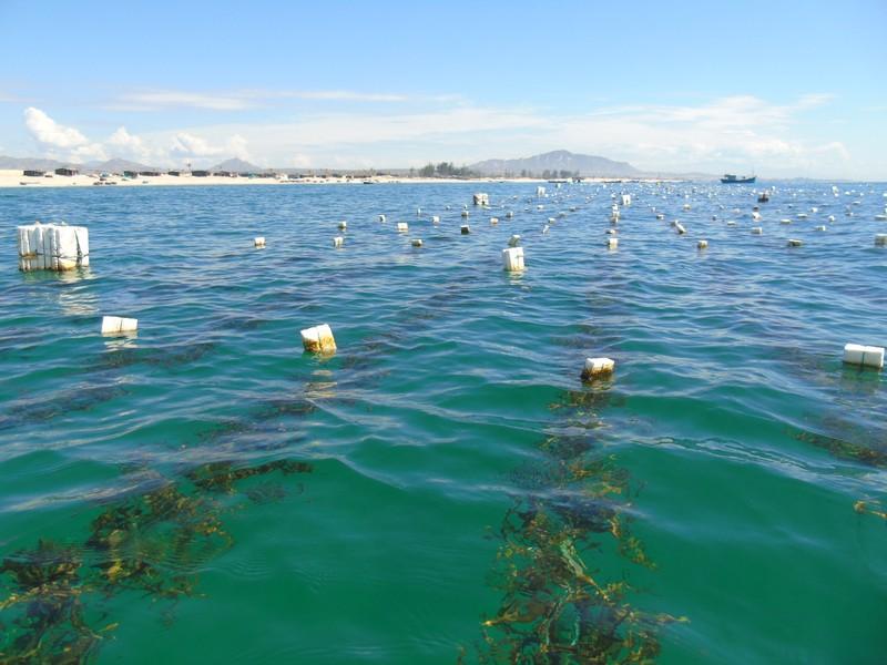 Rong biển, sản phẩm độc đáo trong ngành công nghiệp thực phẩm Việt Nam