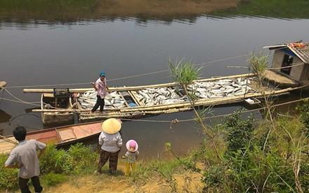 Ngư dân nuôi cá trên sông Bưởi thiệt hại nặng.