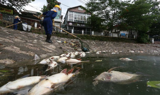 Nghiêm cấm nuôi, thả cá kinh doanh gây ô nhiễm hồ Hoàng Cầu