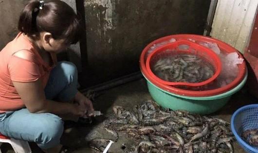 Bắt quả tang bơm tạp chất vào tôm ở chợ đầu mối Hà Nội