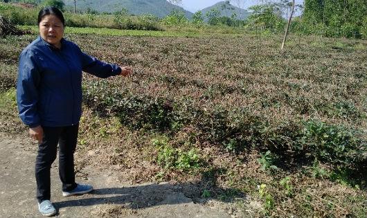 Thái Nguyên: Cấp quyền khai thác cát cả vào đất trồng chè đặc sản của người dân
