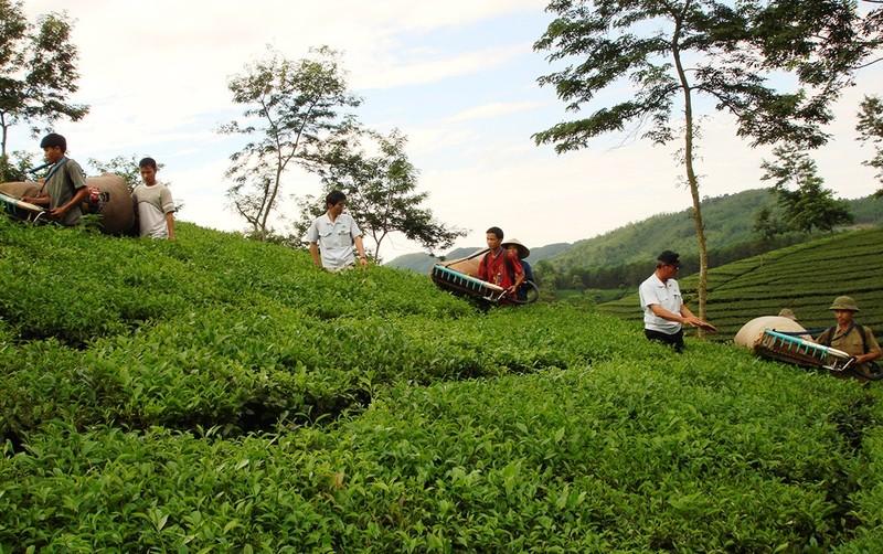 Từ nguồn vốn vay Ngân hàng chính sách, nhiều hộ nông dân đã đầu tư sản xuất nông nghiệp mang lại hiệu quả kinh tế cao.