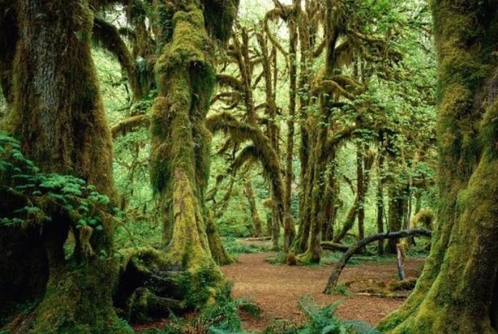 Cùng đến với những khu rừng đẹp như tranh vẽ