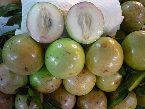 Trái vú sữa Việt Nam được thị trường Hoa Kỳ chào đón